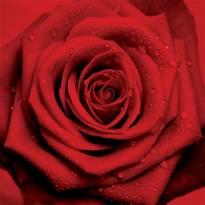 Necrologio ed informazioni sul funerale di Marisa Mantovani