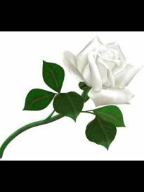 Necrologio ed informazioni sul funerale di Vildo Vichi