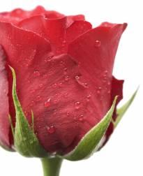 Necrologio ed informazioni sul funerale di Rosaria Galanti