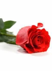 Necrologio ed informazioni sul funerale di Antonia Nanni