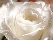 Necrologio ed informazioni sul funerale di Lina Latini