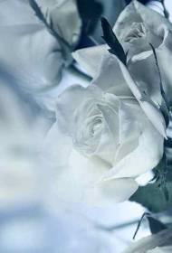 Necrologio ed informazioni sul funerale di Primo Valentini