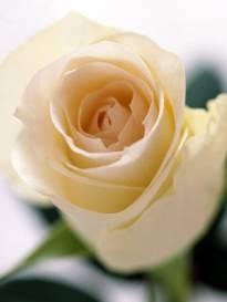 Necrologio ed informazioni sul funerale di Rushe Lazaj