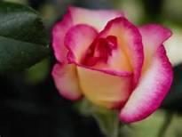 Funerali di oggi a pontassieve monalda renzi servizio - Misericordia bagno a ripoli ...