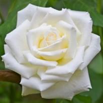 Funerali di oggi a firenze gianfranco trentanove - Misericordia bagno a ripoli ...