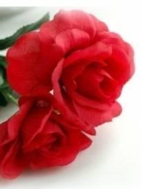 Necrologio ed informazioni sul funerale di Gemma Raffaeli