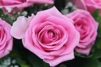 Necrologio ed informazioni sul funerale di Valbona Koreshi