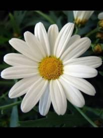 Necrologio ed informazioni sul funerale di Nebbiai Ido