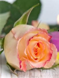 Necrologio ed informazioni sul funerale di Carola Mary Mone