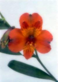 Necrologi di Carla Sironi
