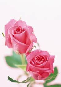 Necrologi di Rosa Taccaliti